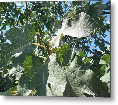 One Fantastic Fig Metal Print by Esther Newman-Cohen