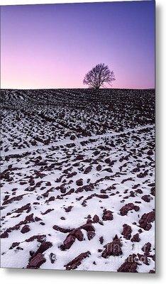 One More Tree Metal Print by John Farnan