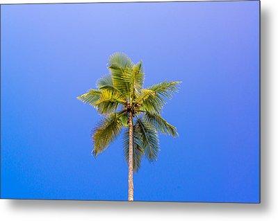 One Palm Tree Metal Print by Jess Kraft