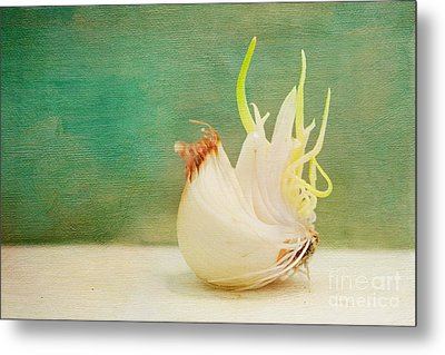 Onion Bird Metal Print by Kay Pickens