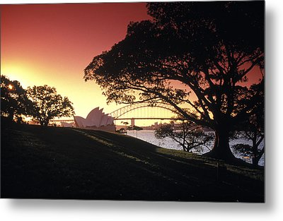 Opera Tree Metal Print by Sean Davey