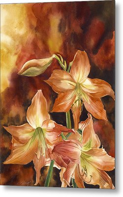 Orange Amaryllis Metal Print by Alfred Ng
