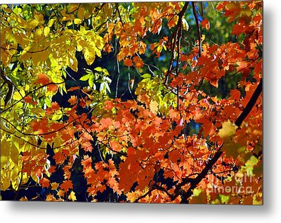 Orange And Yellow Metal Print by Kathleen Struckle