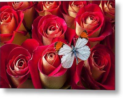 Orange Tip Butterfly Metal Print by Garry Gay