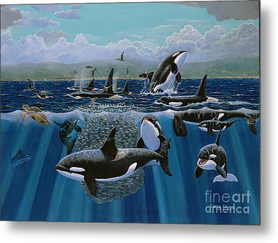 Orca Play Re009 Metal Print by Carey Chen