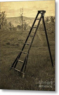 Orchard Ladder Metal Print by Edward Fielding