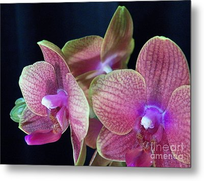 Orchid 2 Metal Print by Judy Via-Wolff