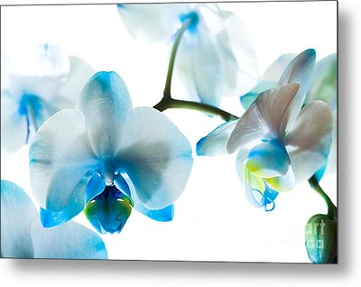 Orchid Closeup Metal Print by Boon Mee