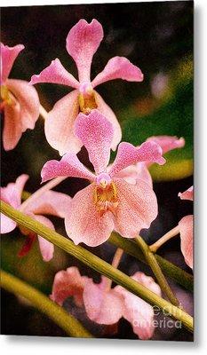 Orchid Number 17 Metal Print by Floyd Menezes