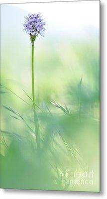 Orchid Metal Print by Simona Ghidini