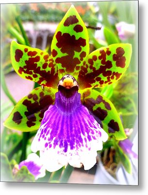 Orchid Metal Print by The Creative Minds Art and Photography