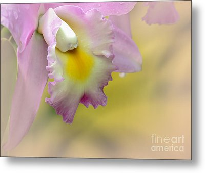 Orchid Whisper Metal Print by Sabrina L Ryan