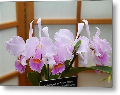 Orchids - Us Botanic Garden - 011315 Metal Print by DC Photographer