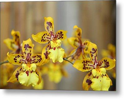 Orchids - Us Botanic Garden - 011345 Metal Print by DC Photographer