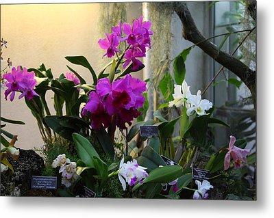 Orchids - Us Botanic Garden - 011353 Metal Print by DC Photographer