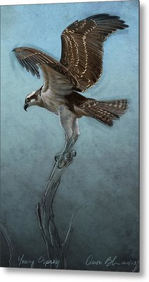 Osprey Metal Print by Aaron Blaise
