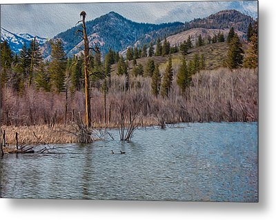 Osprey Nest In A Beaver Pond Metal Print by Omaste Witkowski
