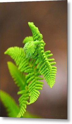 Ostrich Fern Metal Print by Christina Rollo
