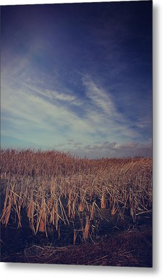 Our Day Will Come Metal Print by Laurie Search