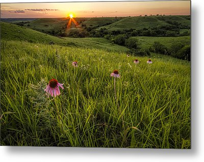Out In The Flint Hills Metal Print by Scott Bean