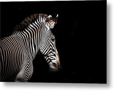 Out Of The Shadows Metal Print by Scott Mullin