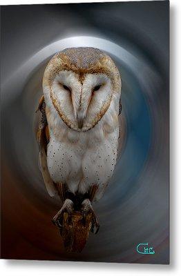 Owl Alba  Spain  Metal Print by Colette V Hera  Guggenheim