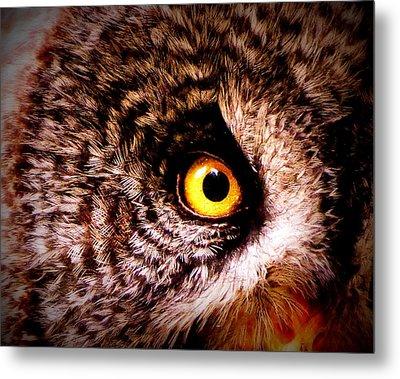 Owl's Eye Metal Print by Ramona Johnston