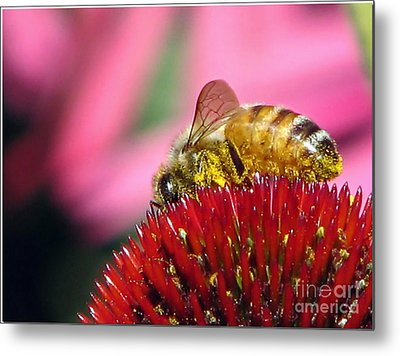 P2 The Pollenator Metal Print by Chris Anderson