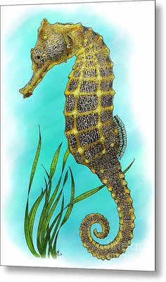 Pacific Seahorse Metal Print by Roger Hall