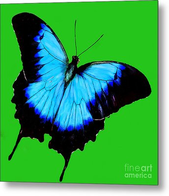 Painted Butterfly Metal Print by Bob and Nadine Johnston