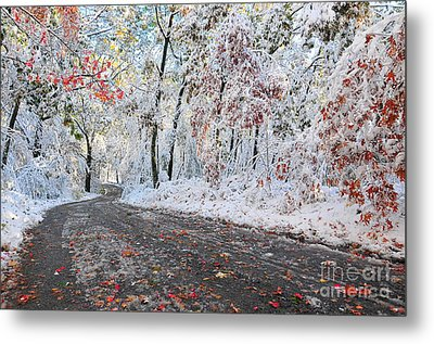 Painted Snow Metal Print by Catherine Reusch  Daley
