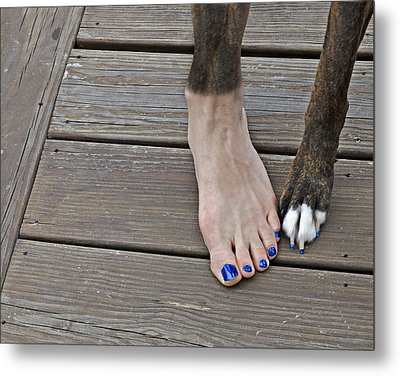 Painted Toenails And Dog Claws Metal Print by Harold Bonacquist