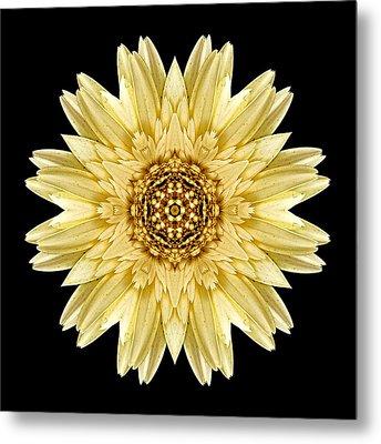 Pale Yellow Gerbera Daisy I Flower Mandala Metal Print by David J Bookbinder