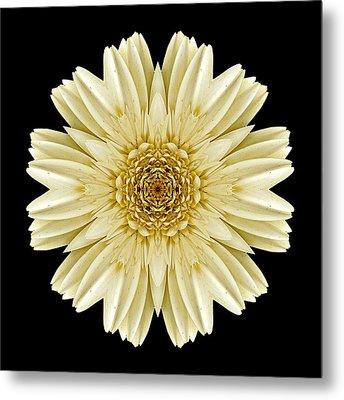 Pale Yellow Gerbera Daisy IIi Flower Mandala Metal Print by David J Bookbinder