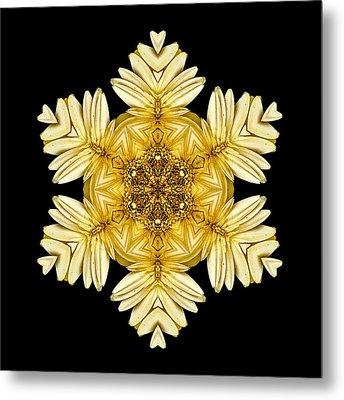 Pale Yellow Gerbera Daisy Vii Flower Mandalaflower Mandala Metal Print by David J Bookbinder