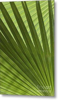 Palm Abstract Metal Print by Patty Colabuono