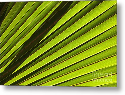 Palm Lines Metal Print by Mike  Dawson