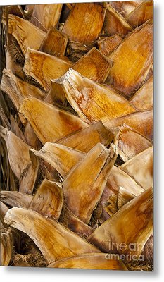 Palm Tree Trunk Detail Metal Print by Bob Phillips