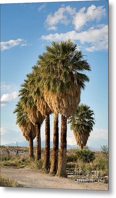 Palm Trees Metal Print by Jane Rix