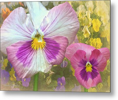 Pansy Duo Metal Print by Sandi OReilly