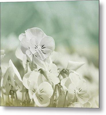 Pansy Flowers Metal Print by Kim Hojnacki