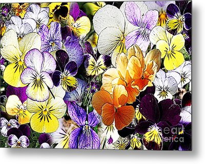 Pansy Posy Metal Print by Erica Hanel