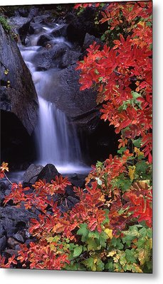 Paradise Valley Stream In Fall Metal Print by Ken Dietz