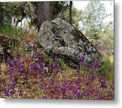 Park Sierra Springtime Landscape-ca Metal Print by Ruth Hager