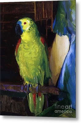 Parrot Metal Print by George Wesley Bellows