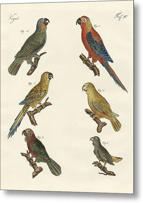 Parrots Of The New World Metal Print by Splendid Art Prints