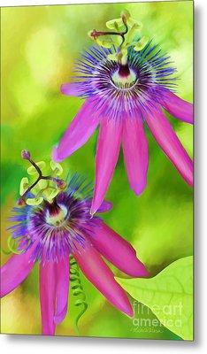 Passiflora Piresii Vine  - Passiflora Twins Metal Print by Michelle Wiarda