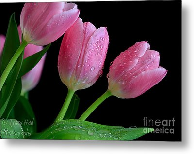 Passion For Pink Metal Print by Tracy  Hall