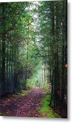 Path Of Adventure Metal Print by Bruce Bley