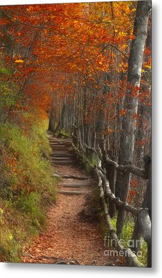 Pathway To Autumn Metal Print by Benanne Stiens
